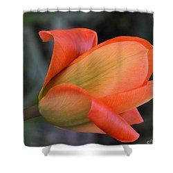 Orange Lady Shower Curtain by Felicia Tica