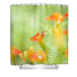 Orange Meadow Shower Curtain by Ann Lauwers