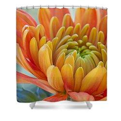 Orange Mum Closeup Shower Curtain