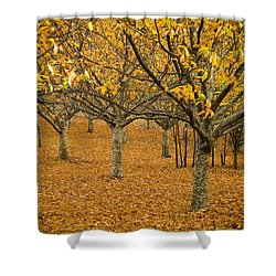 Orange Orchard Shower Curtain by Tim Hester