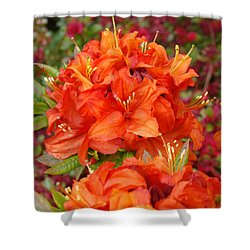 Orange Rhododendron Flowers Art Prints Shower Curtain by Baslee Troutman