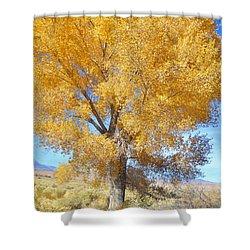 Orange Serenade Shower Curtain by Marilyn Diaz