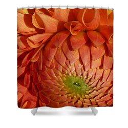 Orange Sherbet Delight Dahlia Shower Curtain by Susan Garren