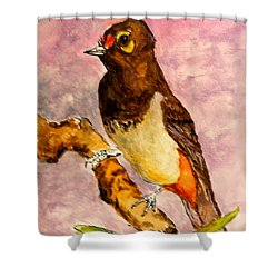 Orange-spotted Bulbul Shower Curtain