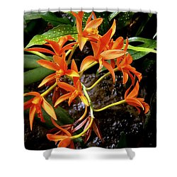 Orange Tendrils Shower Curtain by Rodney Lee Williams