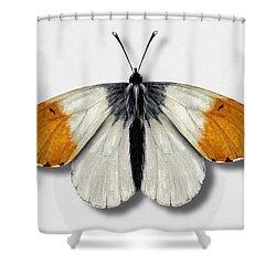 Orange Tip Butterfly - Anthocharis Cardamines Naturalistic Painting - Nettersheim Eifel Shower Curtain