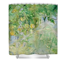 Orange Tree Branches Shower Curtain by Berthe Morisot