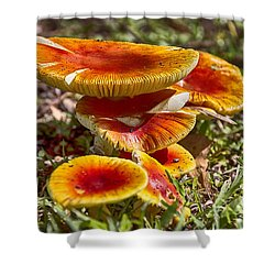 Orange V4 Shower Curtain by Douglas Barnard