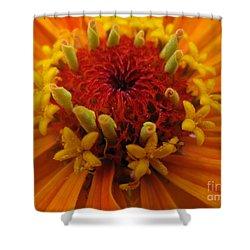 Orange Zinnia. Up Close And Personal Shower Curtain by Ausra Huntington nee Paulauskaite