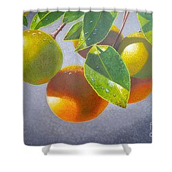 Oranges Shower Curtain by Carey Chen