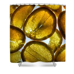 Oranges Shower Curtain by Jane Linders