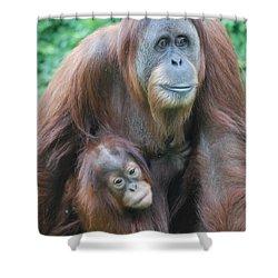 Orangutan Shower Curtain by DejaVu Designs