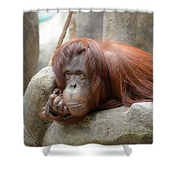 Orangutans Day Shower Curtain
