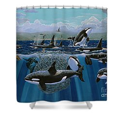 Orca Play Re009 Shower Curtain by Carey Chen
