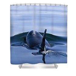 Orca Whale Surfaces In Lynn Canal Shower Curtain by John Hyde