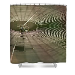 Shower Curtain featuring the photograph Orchard Orbweaver #1 by Paul Rebmann