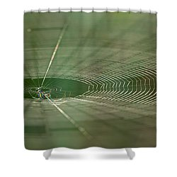 Shower Curtain featuring the photograph Orchard Orbweaver #2 by Paul Rebmann