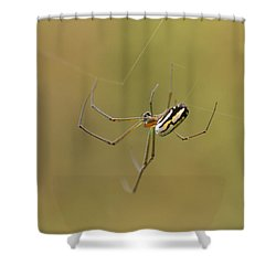 Orchard Spider Shower Curtain