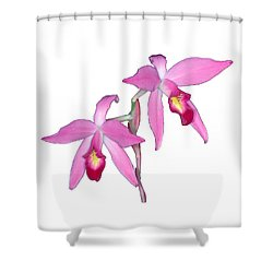 Orchid 1-1 Shower Curtain