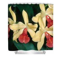 Orchid 11 Shower Curtain