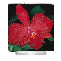 Orchid 12 Shower Curtain
