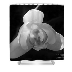 Shower Curtain featuring the photograph Orchid #2 by PJ Boylan