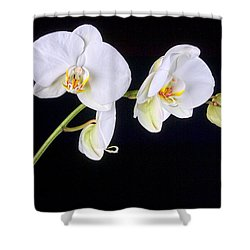 Orchid 2a Shower Curtain by Mauro Celotti