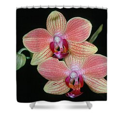 Orchid 4 Shower Curtain