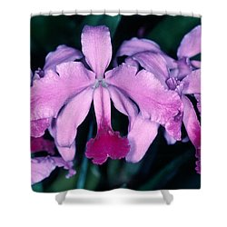 Orchid 6 Shower Curtain