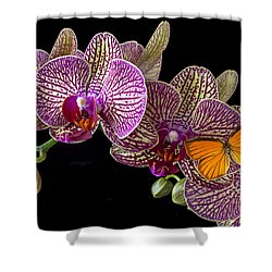 Orchid And Orange Butterfly Shower Curtain