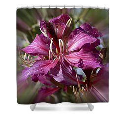 Orchid Blur Shower Curtain by Penny Lisowski