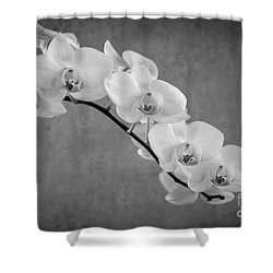 Orchid Bw Shower Curtain by Hannes Cmarits