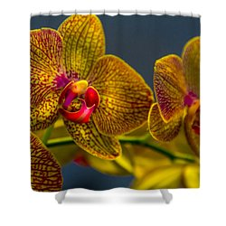 Orchid Color Shower Curtain