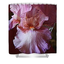 Orchid Colored Iris Shower Curtain by Kay Novy
