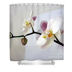 Orchid Coming Out Of Painting Shower Curtain by Barbara Yearty