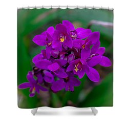 Orchid In Motion Shower Curtain