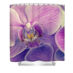 Orchid Lilac Dark Shower Curtain by Hannes Cmarits