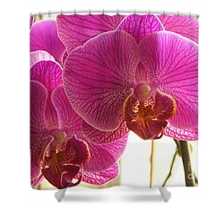 Shower Curtain featuring the photograph Orchid by Lingfai Leung