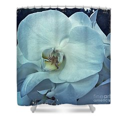 Orchid Shower Curtain by Nina Prommer