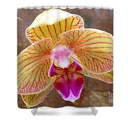 Orchid On Marble Shower Curtain by Barbie Corbett-Newmin