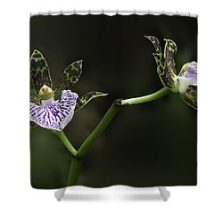 Shower Curtain featuring the photograph Orchid by Ram Vasudev