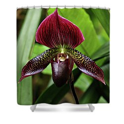 Orchid Shower Curtain by Sandy Keeton