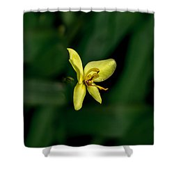 Orchid Suspense  Shower Curtain