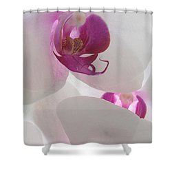 Orchid Trio Shower Curtain