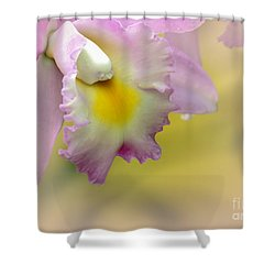 Orchid Whisper Shower Curtain by Sabrina L Ryan