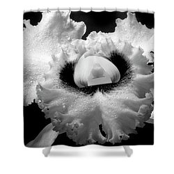 Orchid With Black Wings Shower Curtain by Frederic A Reinecke