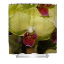 Orchids 181 Shower Curtain