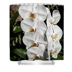 Orchids Anna Shower Curtain