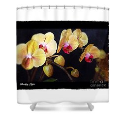 Orchids Arise Shower Curtain by Becky Lupe