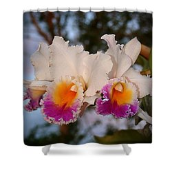 Shower Curtain featuring the photograph Orchid Elsie Sloan by The Art of Alice Terrill